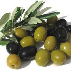 Huile végétale Olive vierge - Olea europea