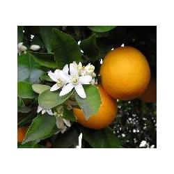 NEROLI BIOLOGIQUE-citrus aurantium ssp.aurantium