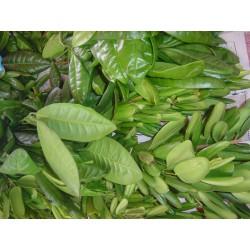 Huile essentielle PIMENT DE JAMAIQUE - pimenta dioica